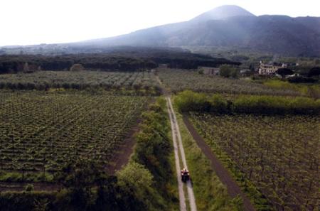 Le Vigne di Villa Dora