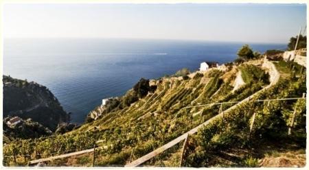 Azienda Biologica Raffaele Palma, le vigne sul mare