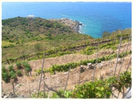 Punta Fieno, le vigne sopra la collina
