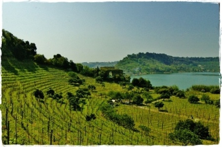 Pozzuoli, Lago d'Averno, Vigneto Storico Mirabella - Piedirosso Campi Flegrei