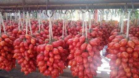 I Piennoli di Pomodori Dop del Vesuvio - foto L'Arcante
