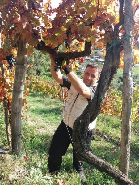 Gennaro Schiano nelle sue vigne a Cigliano - foto A. Di Costanzo