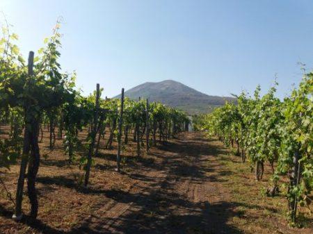 'A Muntagna, il Vesuvio da Cantina del Vesuvio - foto L'Arcante